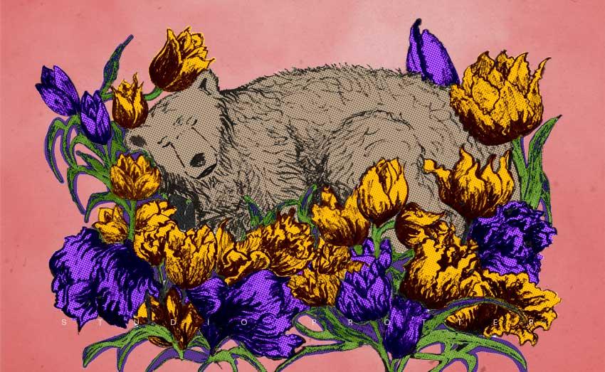 Week 41: Sleeping in a bed of tulips